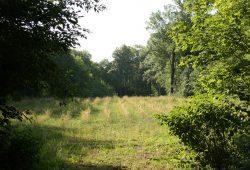 Aufforstungsmaßnahme - hier im Leipziger Auenwald. Foto: Ralf Julke