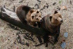 Die beiden vier Jahre alten Geschwister Bea und Benno. Foto: Landratsamt
