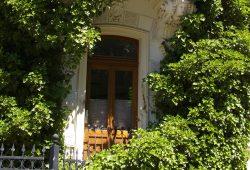 Begrünte Fassade an der Erfurter- Ecke Prellerstraße. Foto: Ökolöwe