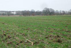 Woher kommen die Nitrat-Einträge ins Grundwasser? Foto: Gernot Borriss