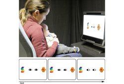 Die Bewegung der schwarzen Punkte scheint die Aufmerksamkeit der Babys genauso auf Gegenstände in der Umgebung lenken zu können, wie es der Blickrichtung einer anderen Person gelingt. Foto: MPI CBS