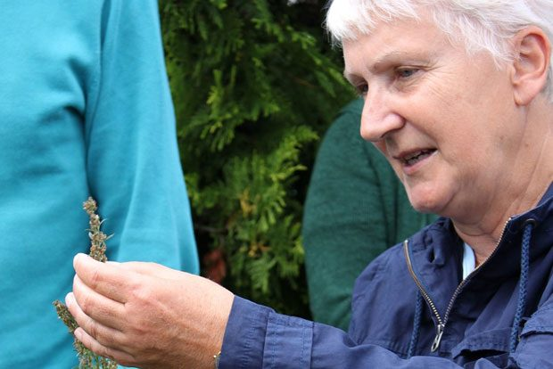 Dr. Sabine Hübert bei einer Kräuterführung. Foto: Ökolöwe