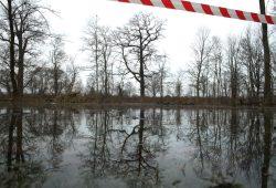 Auwaldvernässungsprojekt.Foto: Ralf Julke