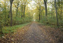 Waldweg in der Burgaue. Foto: Ralf Julke