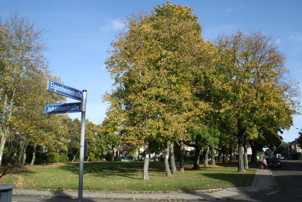 Die umkämpfte Grünfläche an der Eigenheimstraße. Foto: Ralf Julke