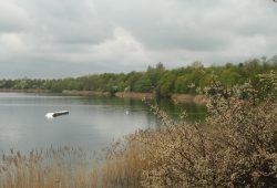 Nordufer des Kulkwitzer Sees. Foto: Ralf Julke
