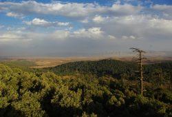 Zedern-Eichenmischwald im Mittleren Altas Marokkos. Die Atlaszeder ist durch den aktuellen Klimawandel bedroht, da sie gegenüber zunehmender Sommerhitze sehr empfindlich ist. Foto: Arbeitsgruppe Physische Geographie der Universität Leipzig