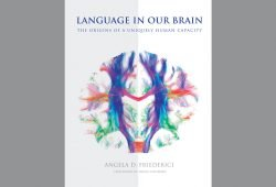 Angela D. Friederici: Language is Our Brain. Cover: The MIT Press