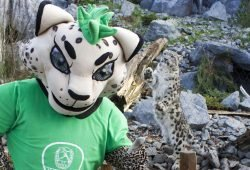 DHfK-Maskottchen BalLEo hat sich Tipps von Schneeleopard Askar geholt. Foto: Zoo Leipzig