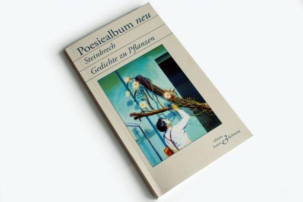 Poesiealbum neu: Steinbrech. Foto: Ralf Julke