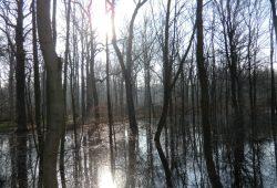 Überschwemmter Auenwald. Foto: Marko Hofmann