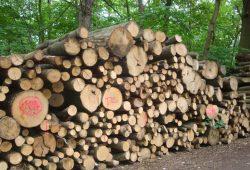 Holzeinschlag im Leipziger Auwald. Foto: Gernot Borriss