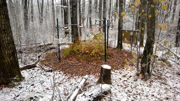 Mit Heizelementen haben die Wissenschaftler den Waldboden erwärmt. Bild: Artur Stefanski