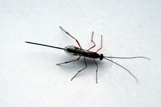 Ein Entomologe weiß bestimmt, wie das Tierchen heißt. Foto: Ralf Julke