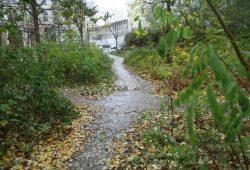 Herbst im Sternwartenwäldchen. Foto: Ralf Julke