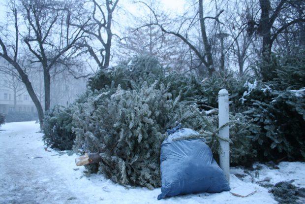Und gleich nach dem Fest werden sie entsorgt: Weihnachtsbäume. Foto: Ralf Julke