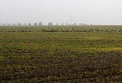 Acker bis zum Horizont – und ein paar Gänse. Foto: Matthias Weidemann