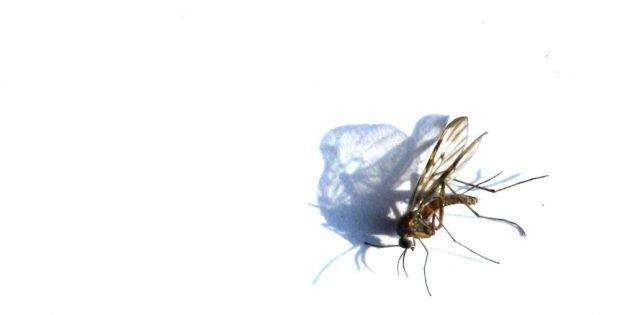Auch Insekten sterben. Foto: Ralf Julke