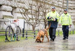 Hundeführer mit Mantrailer Bloodhound. Foto: Polizei Sachsen