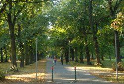 Parkallee in Schönau. Foto: Gernot Borriss