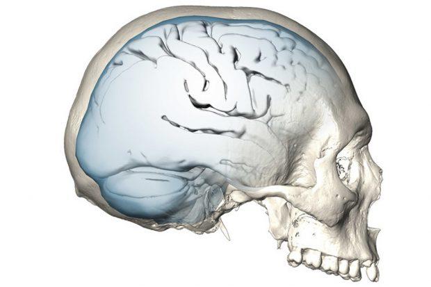Schädel eines modernen Menschen. Foto: MPI EVA/ S. Neubauer, Ph. Gunz
