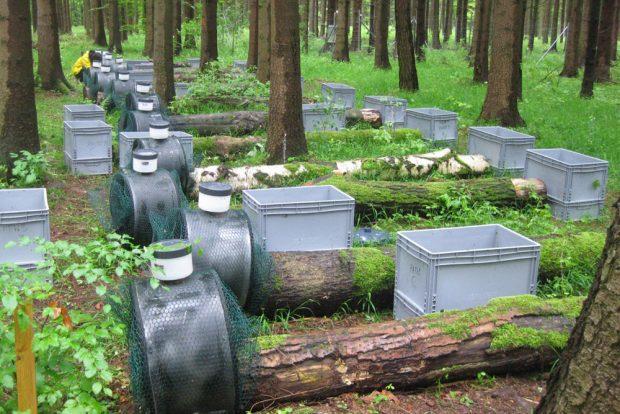 UFZ-Forscher haben in drei unterschiedlichen Waldregionen Deutschlands Holzstämme verschiedener Baumarten ausgelegt. Sie wollen so nachweisen, welche holzbewohnenden Pilzarten die Baumstämme besiedeln. Foto: Witoon Purahong