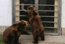Bären nach Winterschlaf, Foto: LRA Torgau