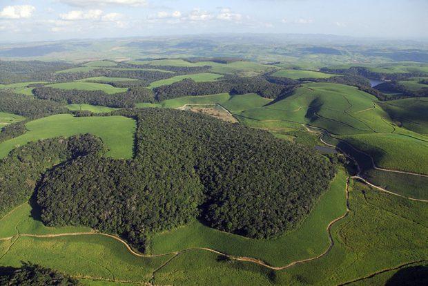 Die Luftaufnahme zeigt Waldfragmente des Brasilianischen Atlantischen Regenwaldes im Nordosten Brasiliens (Mata Atlântica), umgeben von Zuckerrohrplantagen. Foto: UFZ, Mateus Dantas de Paula
