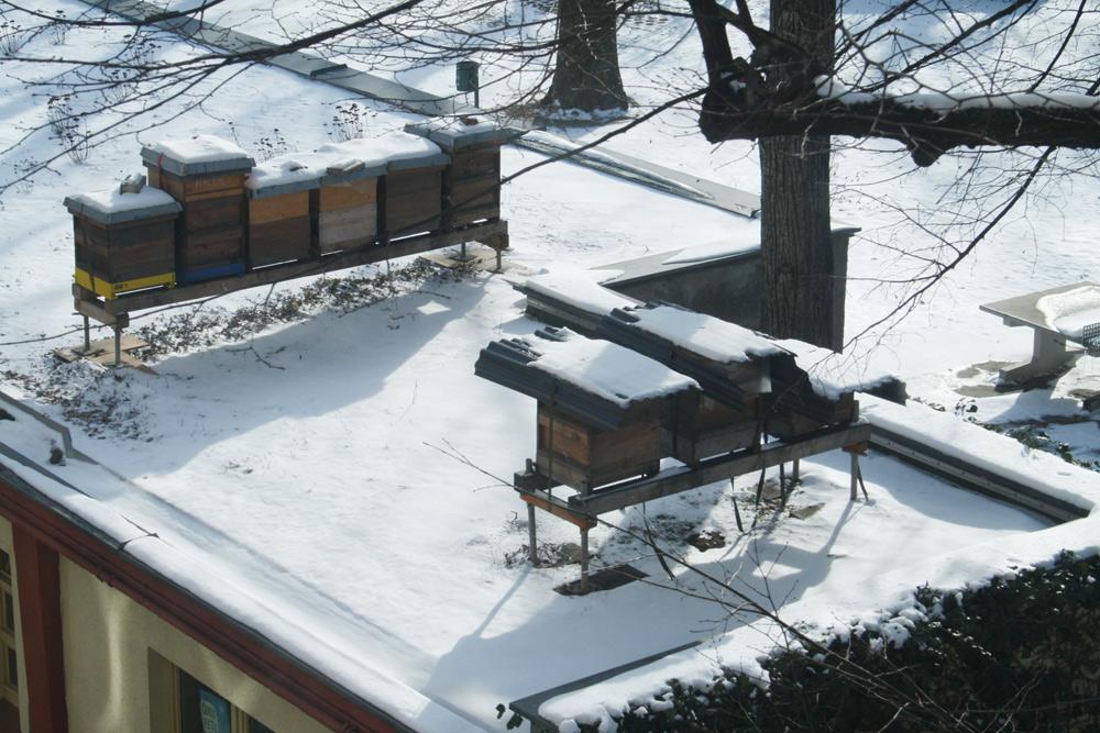 Bienenkästen auf dem Gründach am Haus der Demokratie. Foto: Ralf