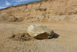 Ein Findling in der Kiesgrube Rehbach in Sachsen, der vor etwa 450.000 Jahren von Gletschern aus Skandinavien dorthin transportiert worden ist. Foto: MPI für evolutionäre Anthropologie