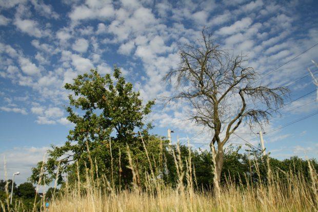 Alte Obstbäume am Heuweg. Foto: Ralf Julke