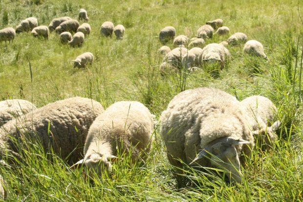 Fleißige Graszupfer an der Neuen Luppe. Foto: Ralf Julke