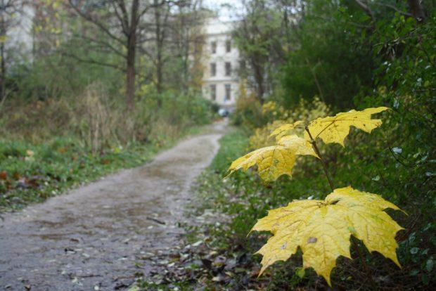 Sternwartenwäldchen im Herbst. Foto: Ralf Julke
