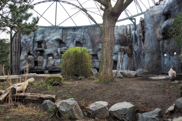 Begehbare historische Freiflugvoliere mit Gänsegeier im Vordergrund. Foto: Zoo Leipzig
