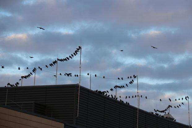 Im Winter auch ein guter Platz zum sicheren Übernachten: auf dem Dach des Uniklinikums. Foto: L-IZ.de