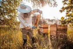 Porsche erweitert das Engagement für den Naturschutz und siedelt weitere 1,5 Millionen Honigbienen im werkseigenen Offroad-Gelände an. Foto: Porsche