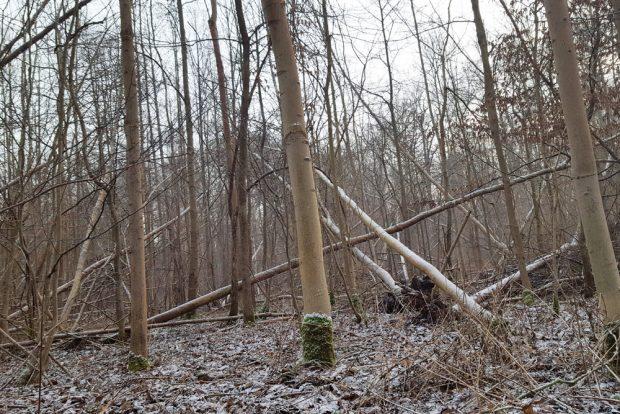 Auch im Leipziger Auenwald wütete Sturmtief Friederike. Foto: Marko Hofmann