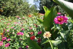 Blumen im Schulbiologiezentrum. Foto: Ralf Julke