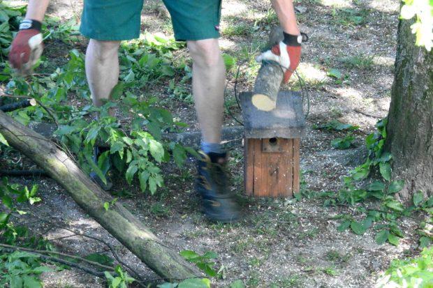 """Dieser Nistkasten im Park an der Corinthstraße wurde vom NABU betreut und von Blaumeisen bewohnt. Bei """"Baumpflegearbeiten"""" wurde er illegal abgenommen. Zusammen mit den Ästen wurden der Nistkasten und das Blaumeisennest zerschreddert. Foto: NABU Leipzig"""