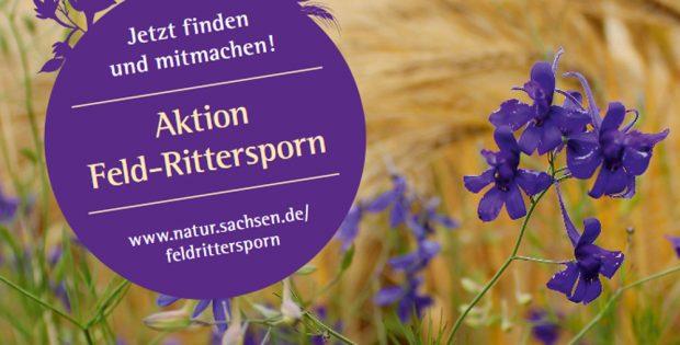 Plakat zur Aktion Feld-Rittersporn. Plakat: Freistaat Sachsen, LfULG