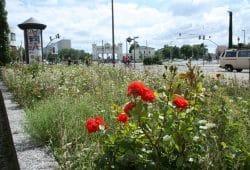 Blühbeet in der Windmühlenstraße. Foto: Ralf Julke