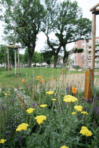 Kleine Blühinseln stehen an den Eingängen in den Cäcilienpark. Foto: Ralf Julke