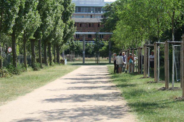 Die kleine Parkallee im Lene-Voigt-Park mit den Patenschafts-Robinien auf der rechten Seite. Foto: Ralf Julke
