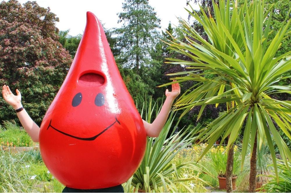 Unter Palmen: Am kommenden Freitag, 22. Juni, kann wieder Blut zu später Stunde gespendet werden. Foto: Stefan Straube/UKL