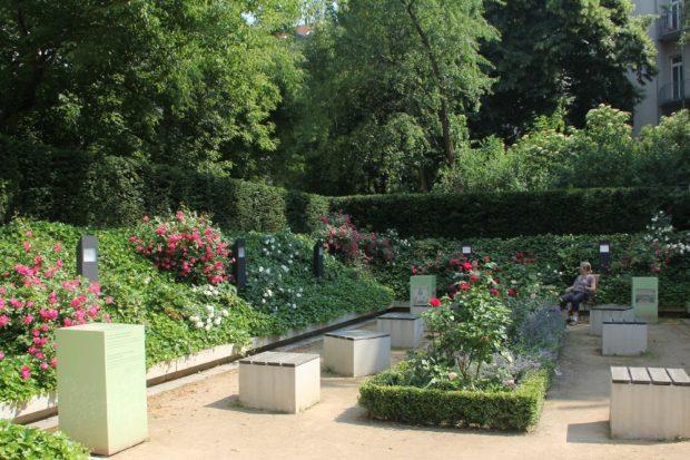 Rosen im Garten des Bach-Museums Leipzig. Foto: Bach-Museum Leipzig/Brigitte Braun
