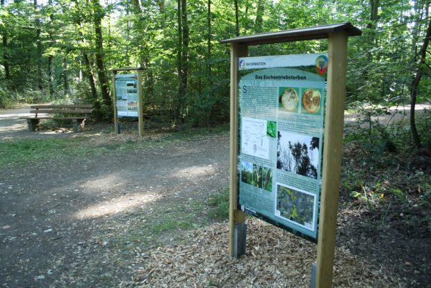 Die Info-Tafeln im Waldgebiet Nonne. Foto: Ralf Julke