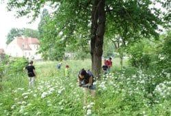 Mitmachaktion Insektensommer. Foto: Beatrice Jeschke