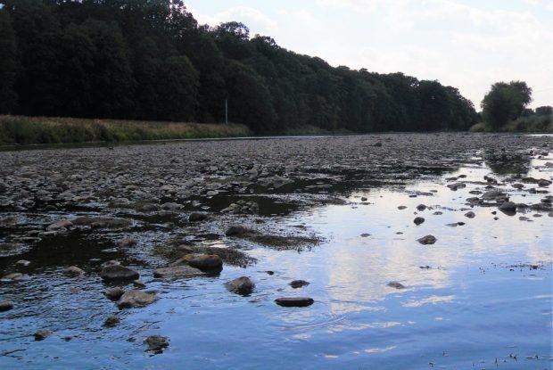 Niedrigwasser in der Mulde Sommer 2018. Foto: Petra Hahn
