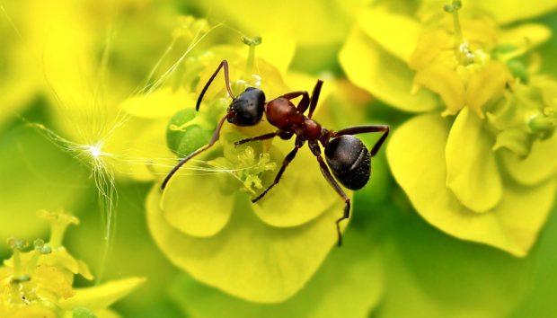 Ameisen und andere Tiere fördern die Leistungsfähigkeit von Wäldern. Bild: Luise, Pixelio