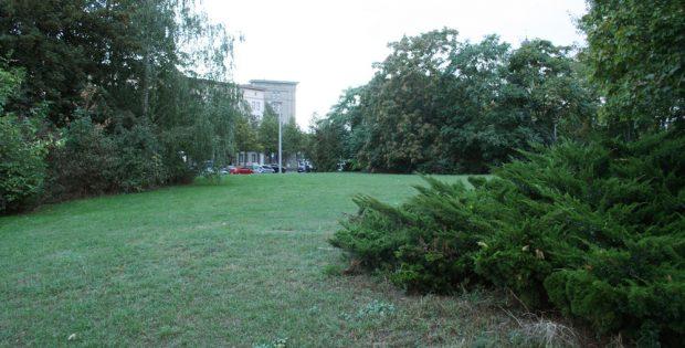 Die Grünfläche, auf der das neue IfL entstehen soll. Foto: Ralf Julke
